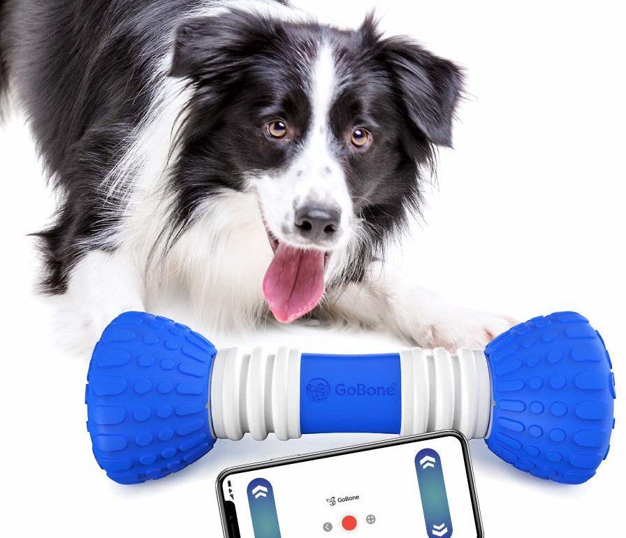 inteligentna zabawka dla psa