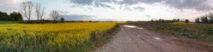 huawei p40 pro panorama
